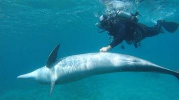 Nager avec les dauphins, un passage obligé à Eilat en Israel
