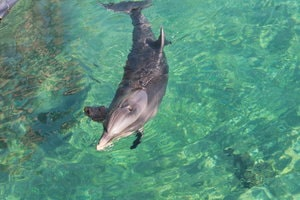 Photo d'un dauphin prise par Voyage En Israel