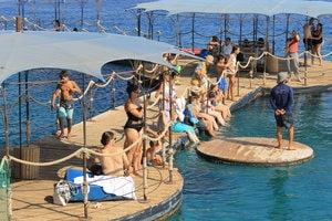 Plateforme permettant de côtoyer les dauphins a Dolphin Reef en Israel