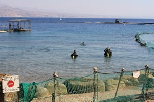 Préparation des plongeurs avant immersion totale parmi les dauphins de Dolphin Reef