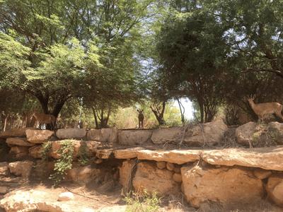 Le parc du Kibboutz de Sde Boker héberge de nombreux animaux sauvages